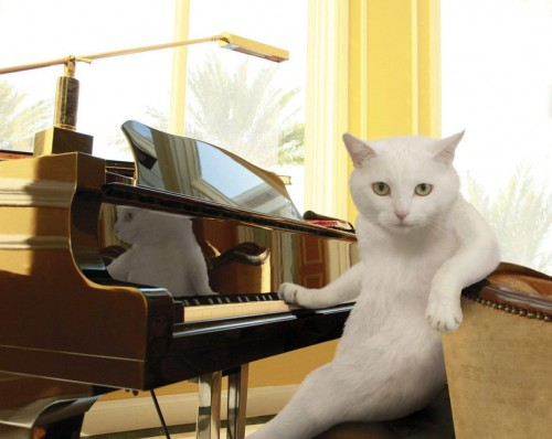 котяра за роялем